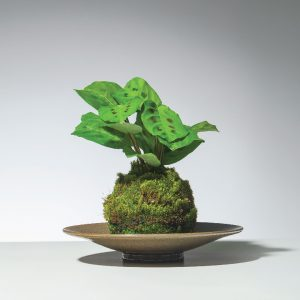 oficinavc-decora-curso-Kokedama