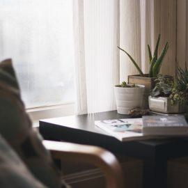 Decoração com plantas: Leve a natureza para dentro de casa e melhore o ambiente!
